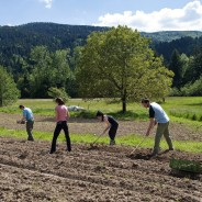 Pilot-Project – LAND SHARING FOR FOOD AND SOCIAL GOOD
